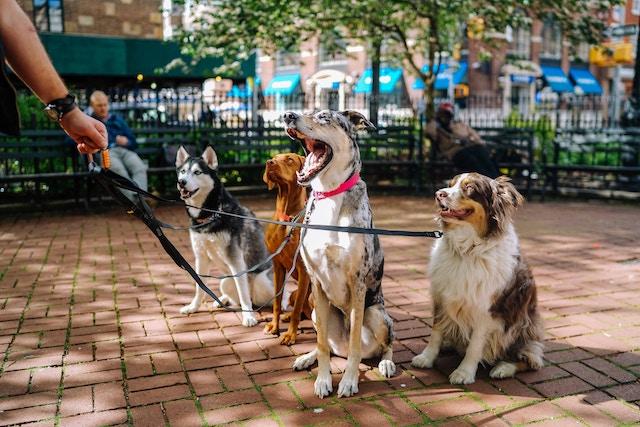 pets-dogs-walking
